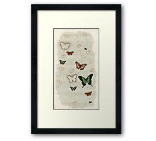 Butterfly Coordinates iii Framed Print