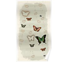 Butterfly Coordinates iii Poster