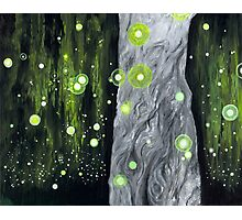 Lightning Bugs Behind a Curtain of Willow Tears Photographic Print