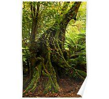Rainforest Trail Poster
