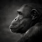 Chimpanzee by Natalie Manuel