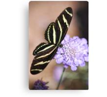 Zebra Butterfly  Canvas Print
