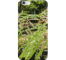 Selective focus on the young acacia branch with leaves and large spikes iPhone Case/Skin