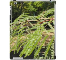 Selective focus on the young acacia branch with leaves and large spikes iPad Case/Skin