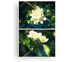 Spring - Crabapple Blossom Canvas Print