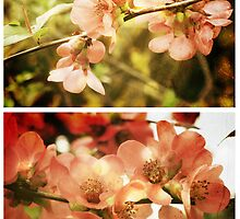 Spring - Japanese Quince by Sybille Sterk