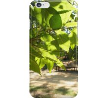 Selective focus on a young branch of a tree with leaves on blurred background iPhone Case/Skin