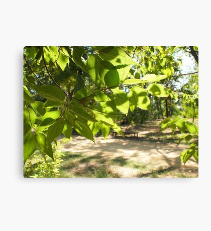 Selective focus on a young branch of a tree with leaves on blurred background Canvas Print