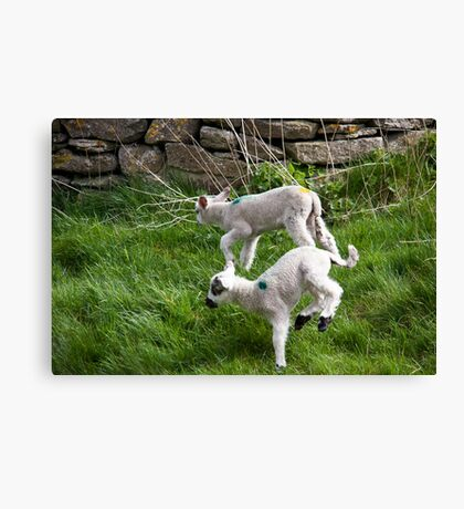 Pair of Woolly Jumpers Canvas Print