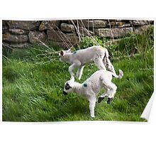 Pair of Woolly Jumpers Poster
