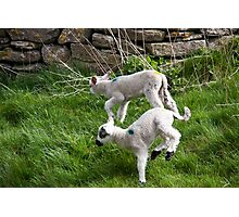 Pair of Woolly Jumpers Photographic Print