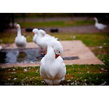 Goose in Half Photographic Print