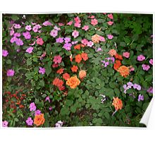 Small Beautiful Orange Flowers Surrounded by Tiny Purple Flowers Poster