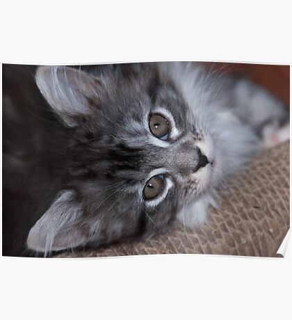 Relaxed kitty Poster