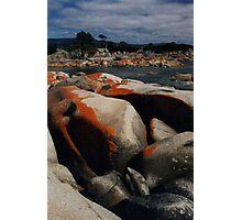 Red Lichen on Rocks by Sea, Tasmania, Australia Photographic Print