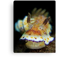 Nudibranch - Chromodoris Collingwoodi Canvas Print