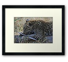Leopard cub lying on a stump Framed Print