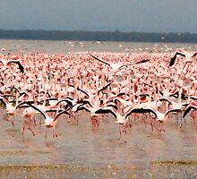 Flamingos by Maya Hiort Petersen
