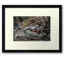 Ancient Predator - Nile Crocodile's grin Framed Print