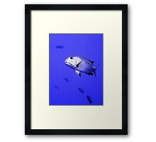Bigeye Emperor Fish in the Red Sea Framed Print