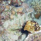 Baby Cuttlefish and Hard Coral by SerenaB