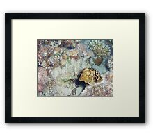 Baby Cuttlefish and Hard Coral Framed Print