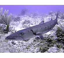 Up Close and Personal with a Barracuda Photographic Print