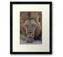 Afternoon Cleaning Session Framed Print