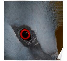 Victoria Crowned Pigeon Eye Poster