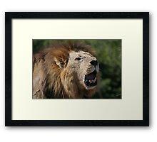 Territorial Roar - Male Lion Framed Print