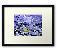 School of Bigeye and Yellowtail Snapper Framed Print
