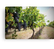 Vintage Vines v.2 Canvas Print