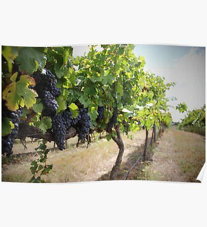 Vintage Vines v.2 Poster
