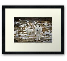 The Pack Framed Print