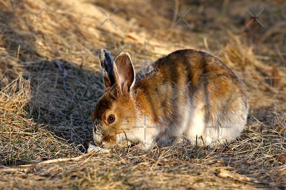 Could this be a Tiger/Hare hybrid? by Jim Cumming