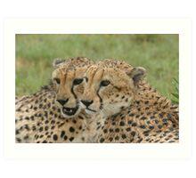 Cuddling in the rain - Cheetah brothers Art Print