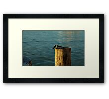 Early Birds Framed Print