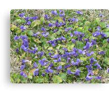Violet patch Canvas Print