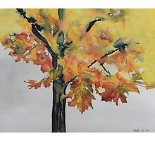 Maple On Fire Photographic Print