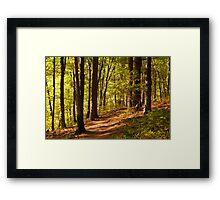 Walden Woods Framed Print