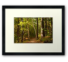 Path Thru The Woods Framed Print