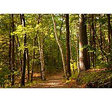 Path Thru The Woods Photographic Print