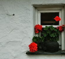geranium window by Michelle McMahon