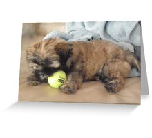 malti tzu puppy Greeting Card
