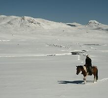 Rider on snow covered mountain plain, Tien-Shan, Kyrgyzstan by Michal Cerny