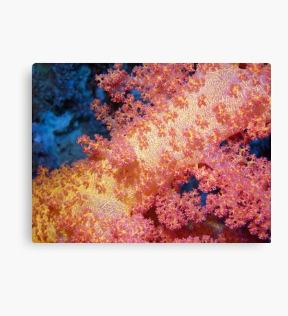 Close up of Pink & Yellow Soft Coral Canvas Print
