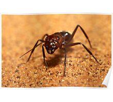 Sand dune ant, Camponotus detritus, Namib desert, Namibia Poster