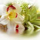Orchid Elegance by Trudy Wilkerson