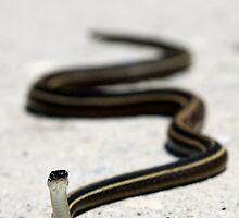Ribbon Snake by J. L. Gould
