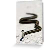 Ribbon Snake Greeting Card